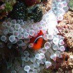 PADI dive courses for beginner Phiket
